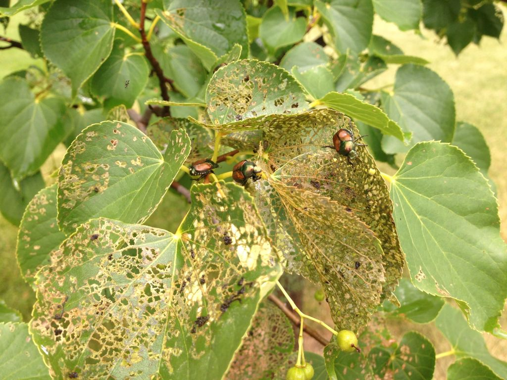 Bugs Infecting A Plant