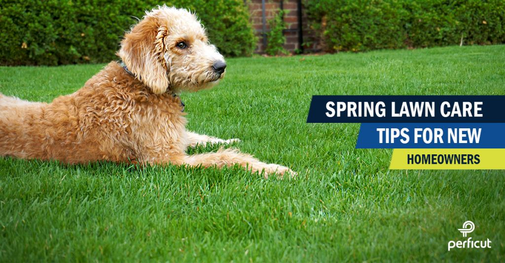 Spring Lawn Care Tips For New Homeowners