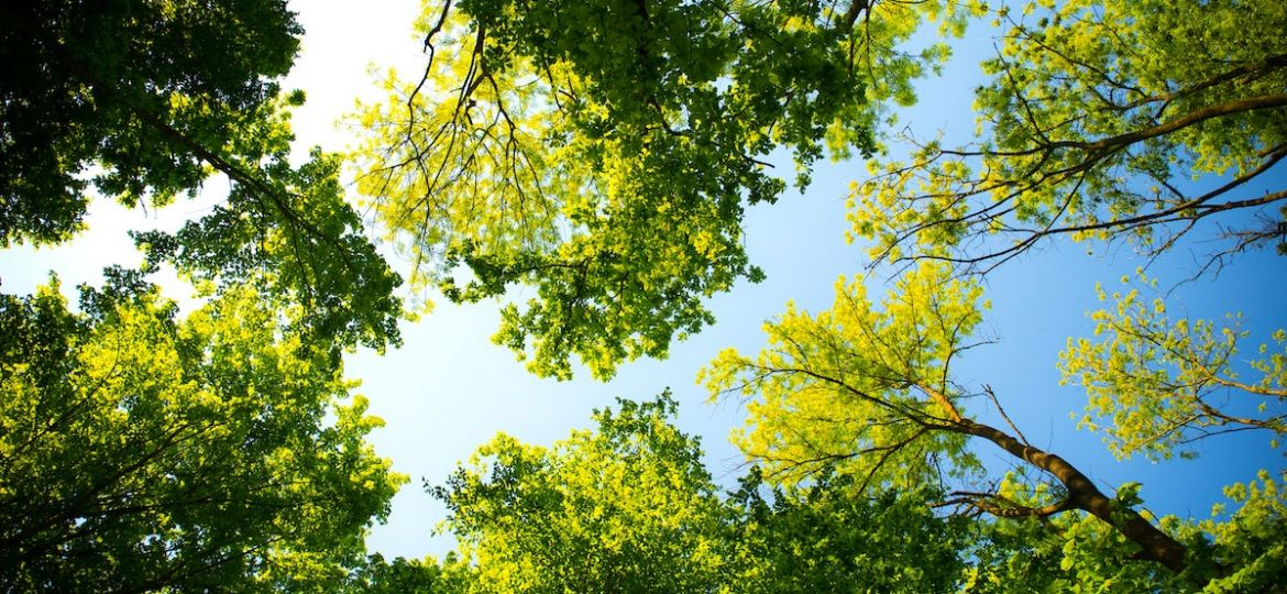 Image of green residential trees looking up from the ground against blue sky