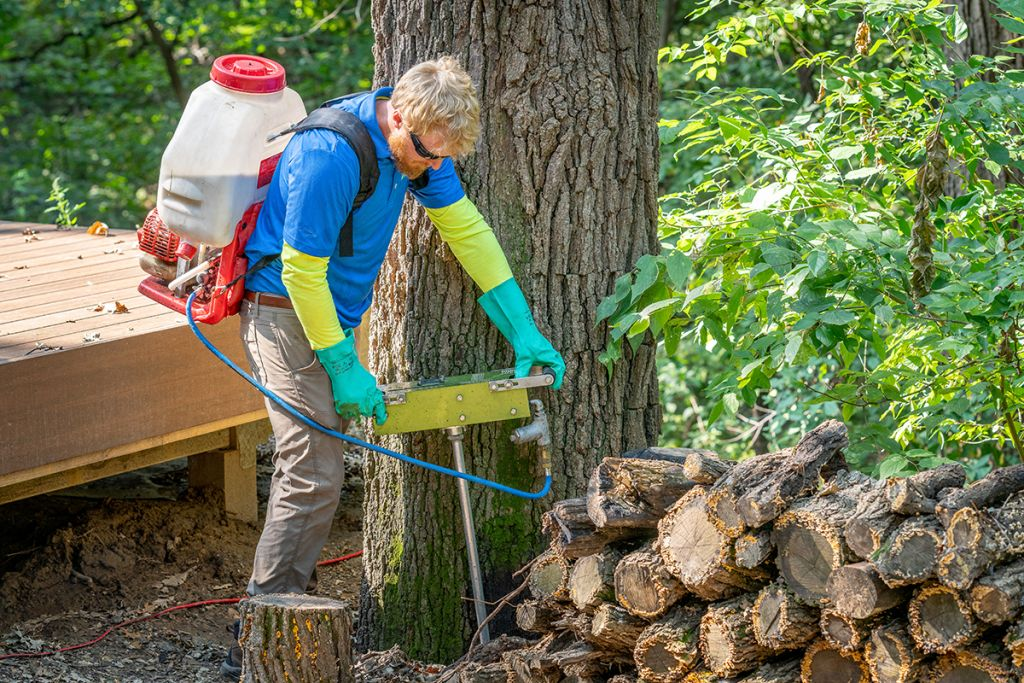 Perficut team member treating tree