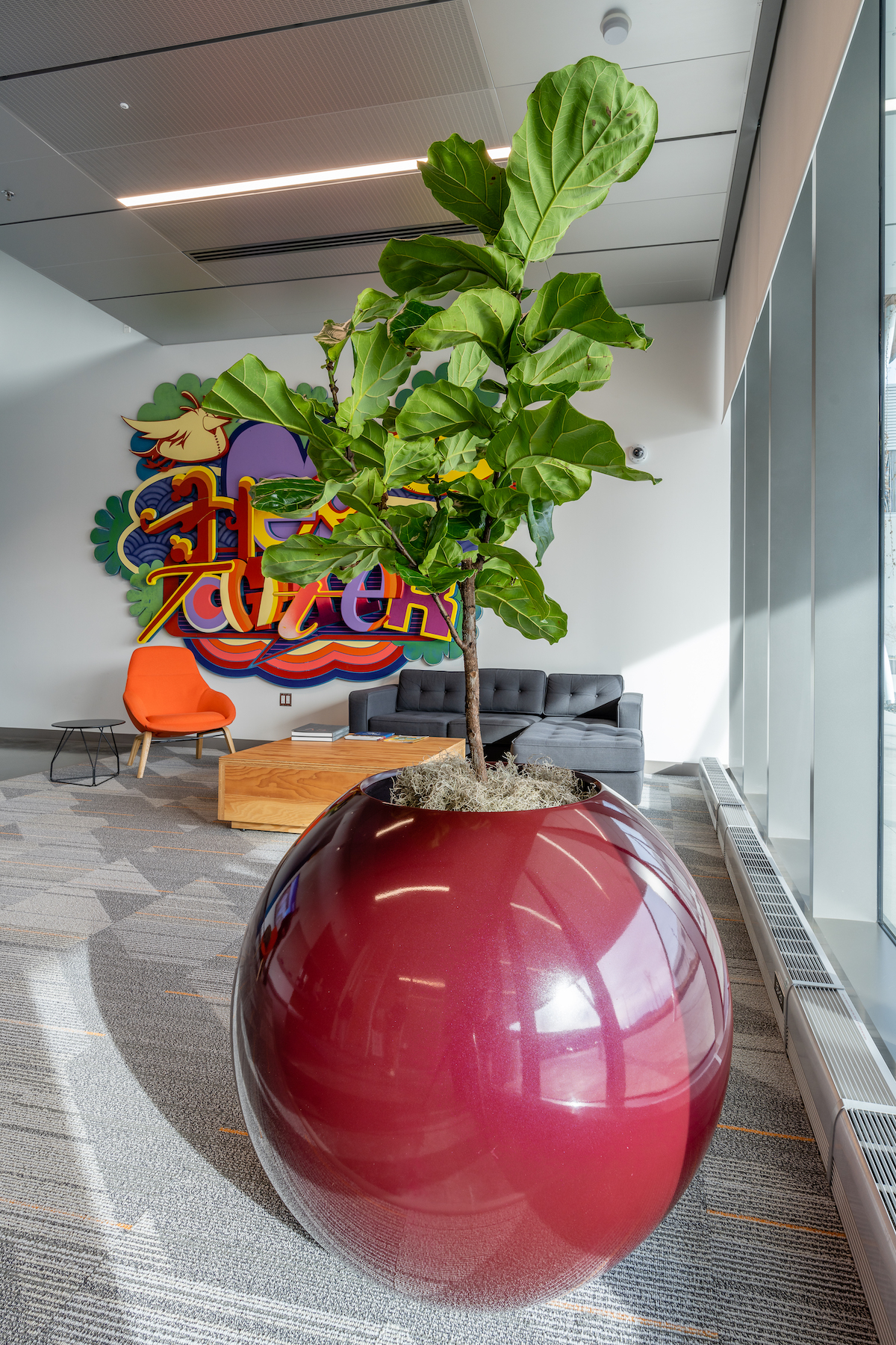 Maroon planter with fiddle leaf fig inside a commercial site