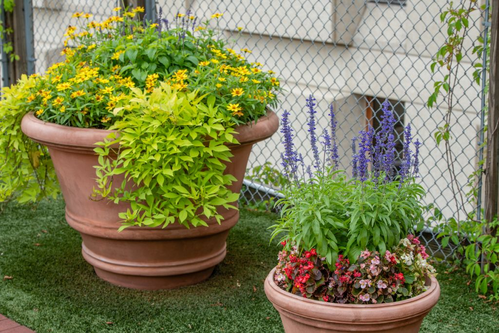 Two planters filled with seasonal yellow, purple and pink flowers