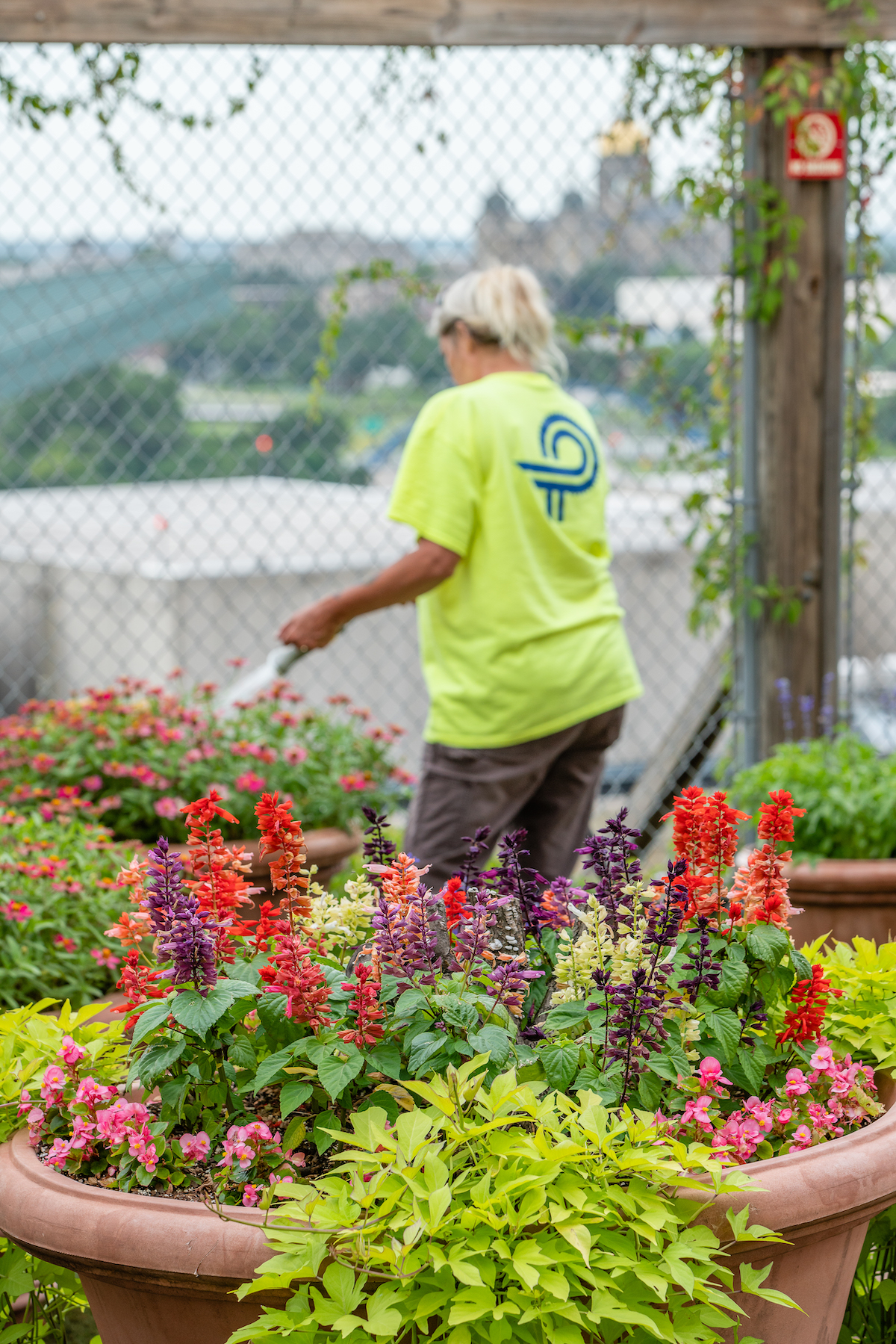 Perficut employee watering planters with colorful potted planter in the foreground