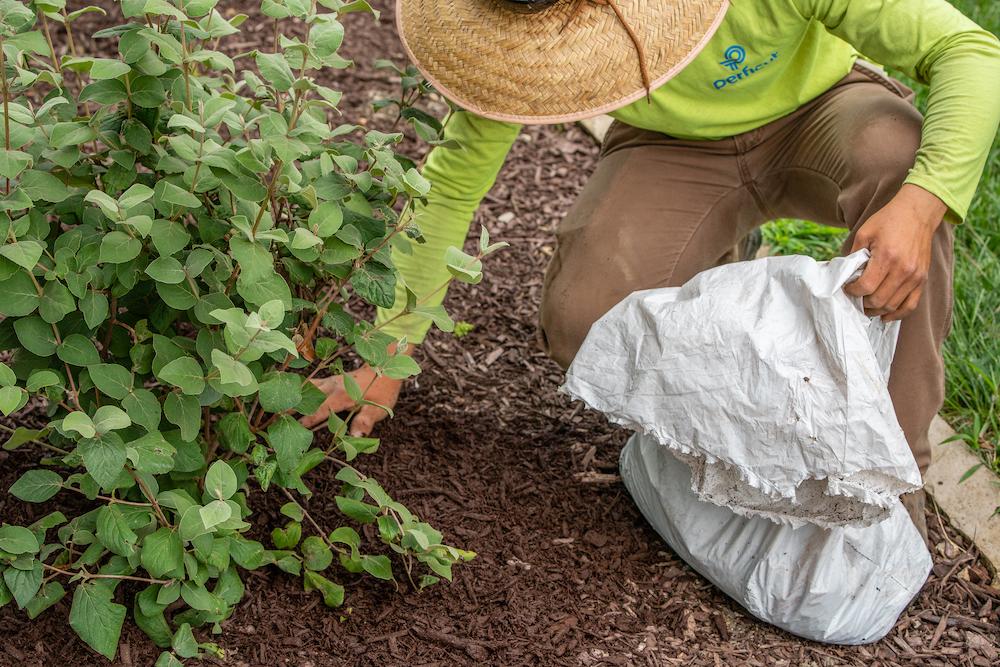 Perficut team member weeding and trimming bush
